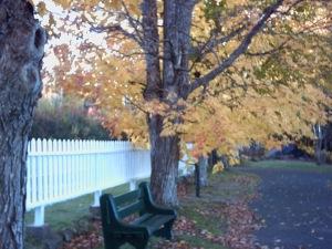Fall in Albert County