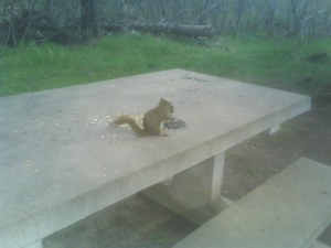 Squirrel eating in Mapleton Park