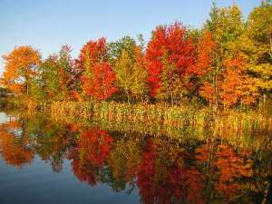 Fall colours at their peak in Moncton Oct.6.09