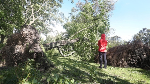 Trees uprooted in St. John's, NL, 11 Sept 2012 (CP photo)