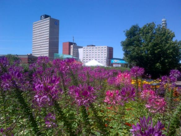 Despite a relatively dry month, flowers are flourishing in downtown Moncton, 24 Aug 2013 (Dearing)