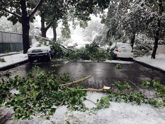 Heavy, wet snow snaps tree branches in Calgary, AB, 10 Sept 2014 (Twitter)