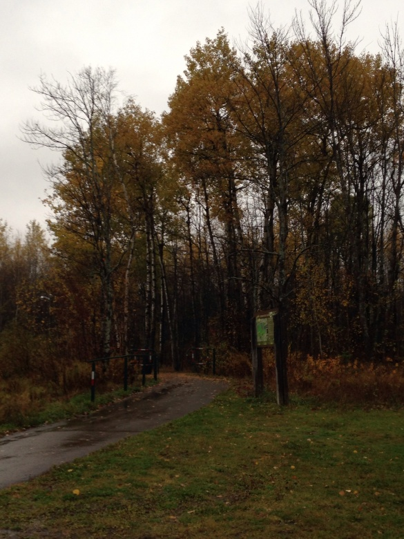 Trees now bearing fewer leaves at Fairview Knoll Park, Moncton, NB, 26 October 2014 (Dearing)