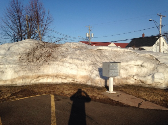 A typical snowbank in NE Moncton, 13 April 2015 (Dearing)