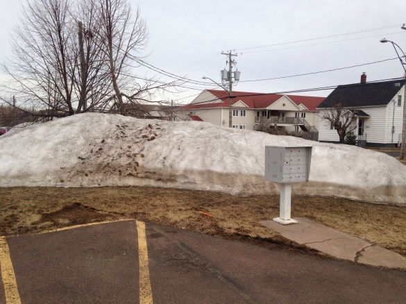 Snowbank in NE Moncton, 20 April 2015 (Dearing)