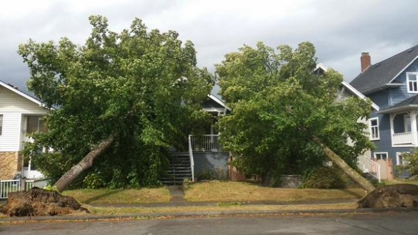 Two trees topple onto two houses, Vancouver, BC, 29 August 2015 (Twitter)