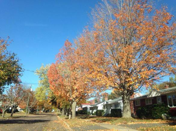 Fall leaves barely cling to trees in west end Moncton, 28 Oct 2015 (Dearing)