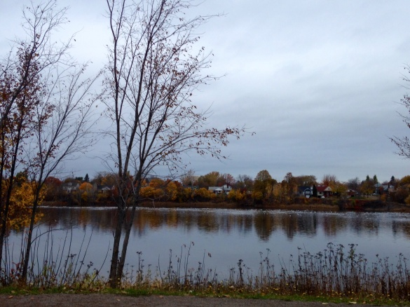 Jones Lake, Moncton, 06 Nov 2015 (Dearing)