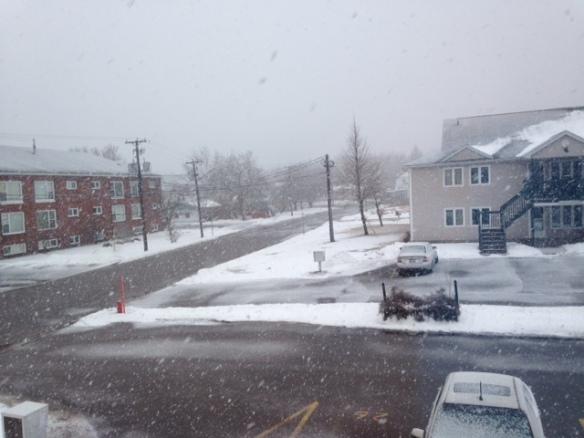 snowy29mar