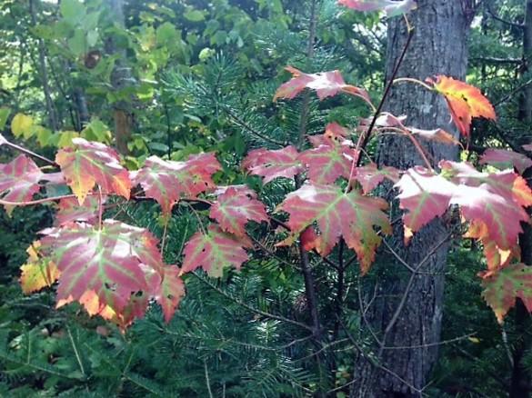 fall-hint