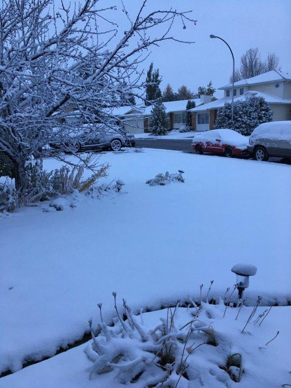 saskatoon-snow